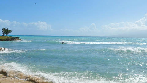 Pelican fishing in Bas du Fort beach in Guadeloupe, Caribbean sea Live Action