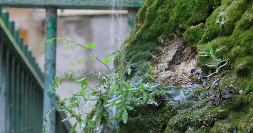 Water Drops Through The Green Moss Footage