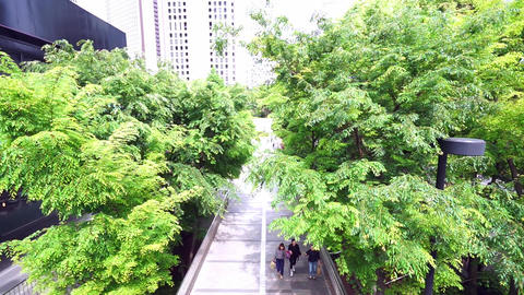 People who walk the tree-lined streets of the city (High Angle) Footage
