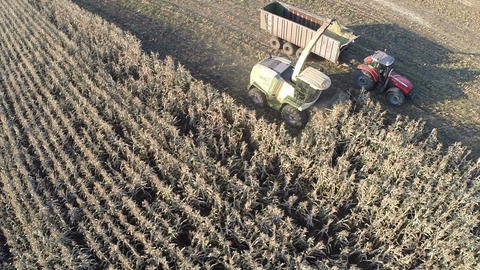 Aerial shot of wheat harvesting in the field Footage