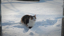 Funny cat playing in a snow. Slow motion Live Action