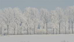 Winter landscape of trees covered in snow. Zoom out Footage