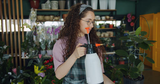 Smiling young florist taking care of green plant watering using bottle sprayer Live Action