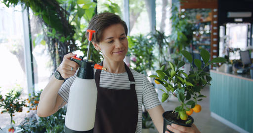 Pretty lady florist watering exotic plant in pot holding sprinkler smiling Footage