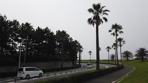 Maihama015 ライブ動画