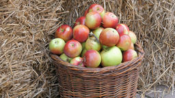Tilt down shot at the apples in a wicker basket Footage