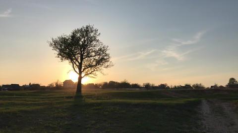 Single tree landscape over sunset Footage