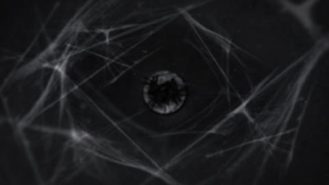CREEPY SPIDERS LOGO INTRO After Effects Template