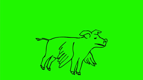 Pig Flying Drawing 2D Animation Animation