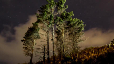Lonely trees in New Zealand. Gloomy weather. Gradually the sun goes down. Comes Live Action