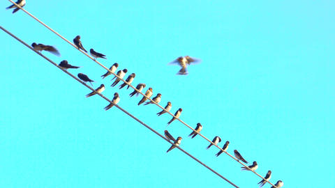 Some birds over wire with clear blue sky in background Live Action