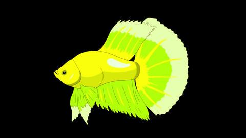 Big Green Aquarium cockerel fish Alpha Matte looped Animation