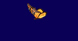 Monarch butterfly flapping wings in slow motion movements , flight Animation