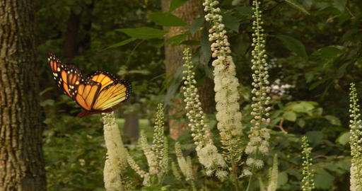 Monarch Butterfly slow motion flight against forest background, stylized 3d comp Animation
