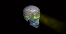 Rotating glowing skull and brain against transparent background Animation