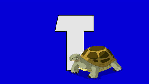 Letter T and Turtle (foreground) Footage