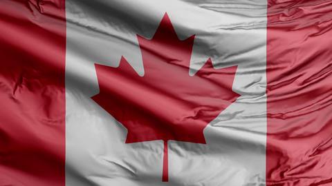 Canada Flag Real Animation Loop Animation