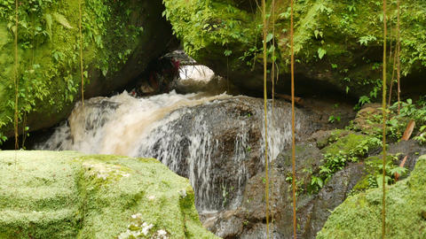Waterflow in the temple surrounded by rocks covered with bright green moss Live Action