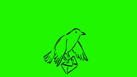 Bird Delivering Mail Drawing 2D Animation Animation