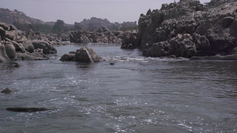 Birds live and hunt near water Footage