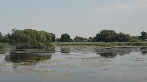 Panorama of the river in the countryside in summer Footage