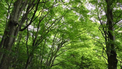 新緑の山里 ライブ動画