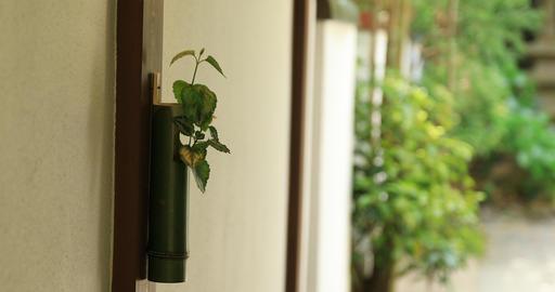Bamboo vase at Japanese garden at Hokokuji in Kamakura handheld Footage