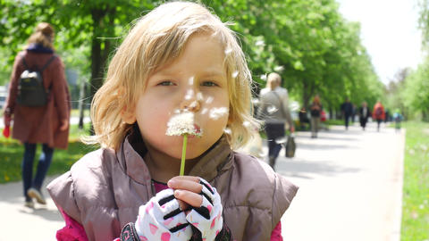Happy child blowing dandelions. Little girl with fluffy dandelion Live Action