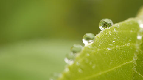 Close up of dew water on green leaves with blurred nature background Footage