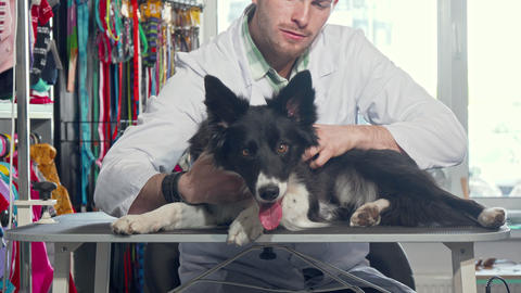 Male vet doctor examining fur of a cute happy dog at his clinic Live Action