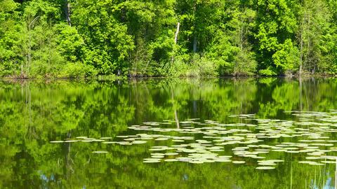 summer lake in forest landscape, 4k Footage