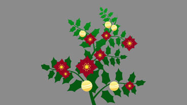 Christmas Holly Branch After Effects Template