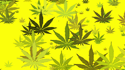 Green Marijuana On Yellow Loop Background Animation