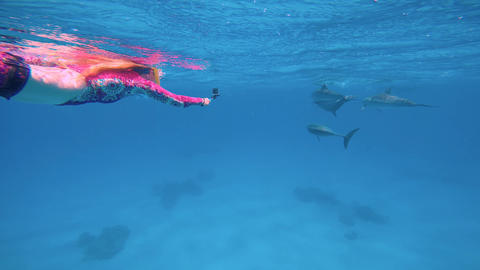 Fantastic dive with dolphins. Diving in the Red sea near Egypt Footage