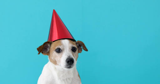 Cute dog in red party hat Designed Footage