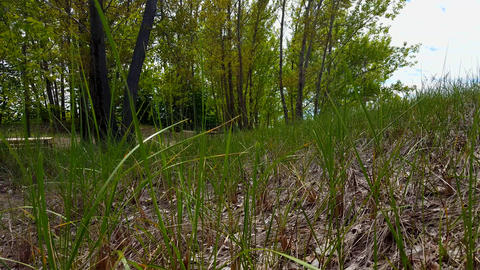 Viewpoint of Green Forest Floor, Long Grass, and Plants. Up-Close Lush Greenery Under Woodland Footage