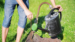 One man pouring water from outdoor faucet into watering can in summer Footage