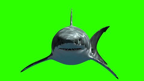 Great White Shark Megalodon Animation