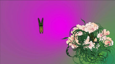 flowers's bush with butterflyies Animation