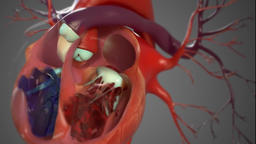 Heart beat. Right side pumps deoxygenated blood and left side oxygenated blood Footage