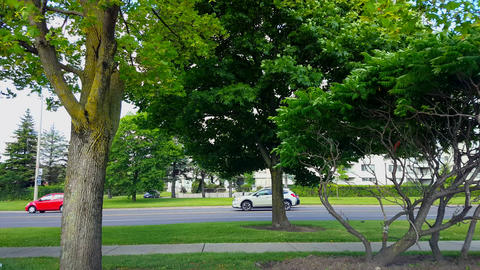 Side View of City Traffic Driving and Slowing Down By Lush Green Trees. Urban Landscape With Car Footage