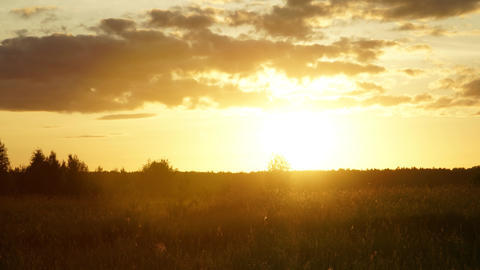 Sunset hyperlapse. Evening summer sun, field, grass, insects and running clouds Footage