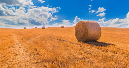 hay bales landscape of yellow grass fields under blue sky with white clouds, agriculture and nature Footage