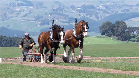 Ancient and modern ploughing methods Footage