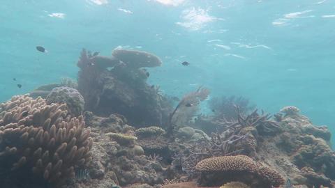 珊瑚と水面05 Footage