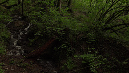 Dim leafy forest, small rill flow down hill slope, dark environment, slide shot Footage