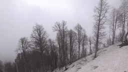 Several naked trees at snowy mountain slope, aerial view, misty weather Live Action