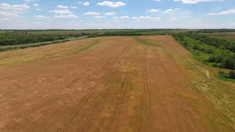 Aerial footage of wheat field swaying in the wind Footage