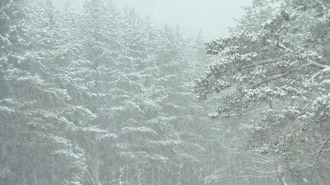 冬 西湖癒しの里 11 Footage