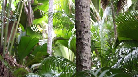 Palm tree forest, Praslin island, Seychelles Live Action